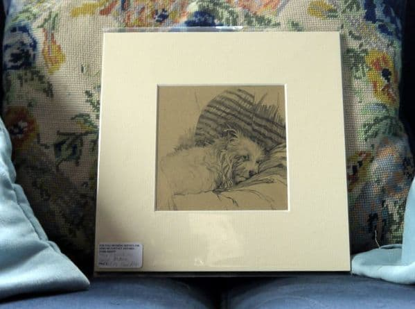 White Sealyham - lying down in a blanket - Sea A4 - 1930's print by Cecil Aldin