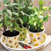 Emma Bridgewater Buttercup Plant Pot Set
