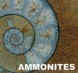 AMMONITES AND THEIR RELATIVES