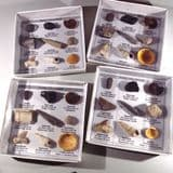 FOSSIL COLLECTION (includes geological timescale) - ideal for beginners (available at fairs only)