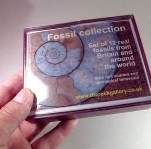 FOSSIL SET - a starter collection of 12 high quality fossils - exclusive to The Rock Gallery