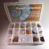 FOSSIL SET (SUPERIOR SET) - A  high quality collection of 16 fossils plus educational material