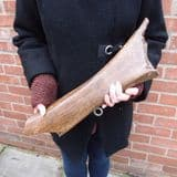 MAMMOTH LEG BONE - About 20,000 years old - Dredged from the North Sea off Lowestoft