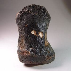 MAMMOTH TOE BONE -  about 20,000 years old - Dredged from the North Sea floor