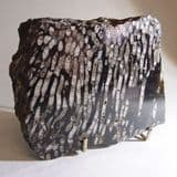 PART OF A FOSSIL CORAL REEF  -  325 million years old  -  Ireland
