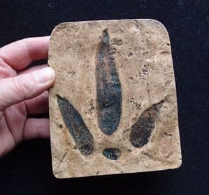 REPLICAOF THE FOOTPRINT OF A JURASSIC MEAT-EATING DINOSAUR  - Oxfordshire