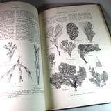TREATISE ON GRAPTOLITES (Part 5 of the Treatise on Invertebrate Palaeontology) (second hand copy)