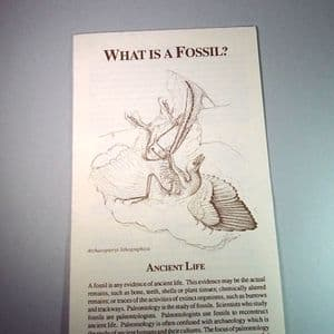 WHAT IS A FOSSIL? - Illustrated pamphlet about fossils (available at fairs only)